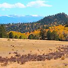 Pikes Peak from Park County by Christine Ford