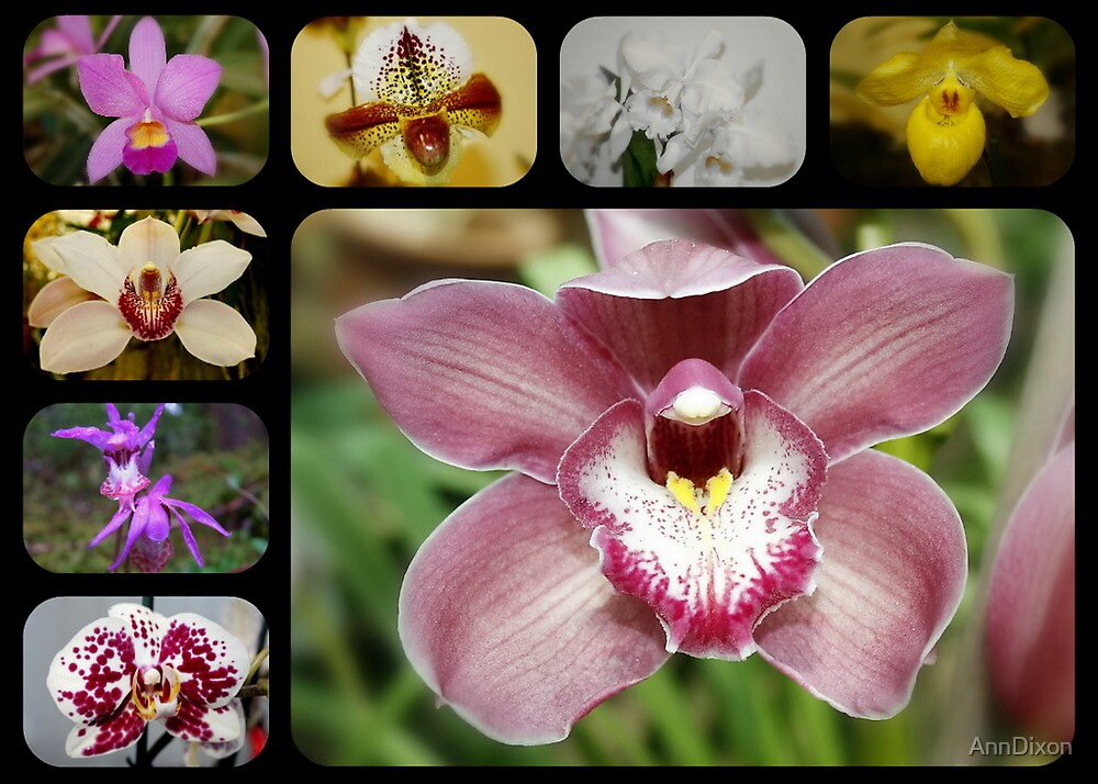 Orchid Collage by AnnDixon