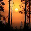 Foggy Day Sunrise by Deborah  Benoit