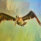 Pelican on Texture by Deborah  Benoit