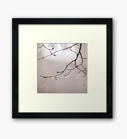 Cold morning Framed Print