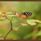 Garden Visitor by Elizabeth Heath
