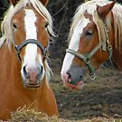 A horses capture by marchello