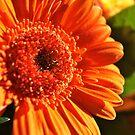 Vivid orange by freshairbaloon