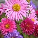 Pastel flowers by freshairbaloon