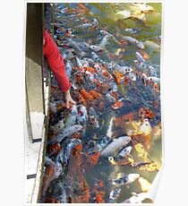 Something Not Seen Every Day....Petting The Fish Poster