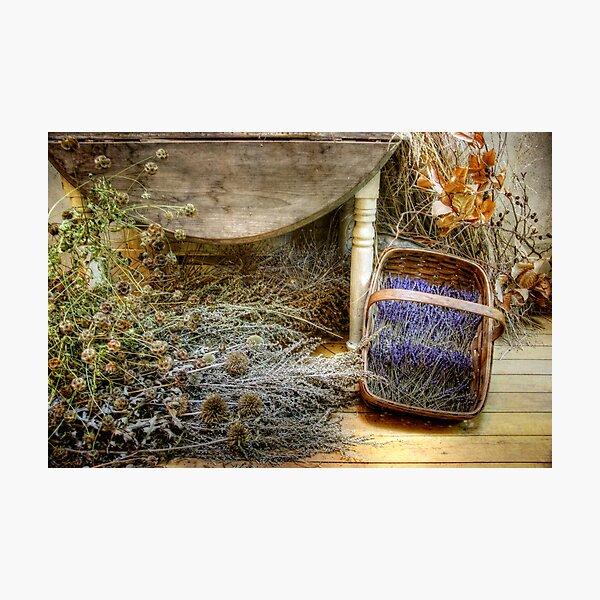 The Lavender Basket Photographic Print