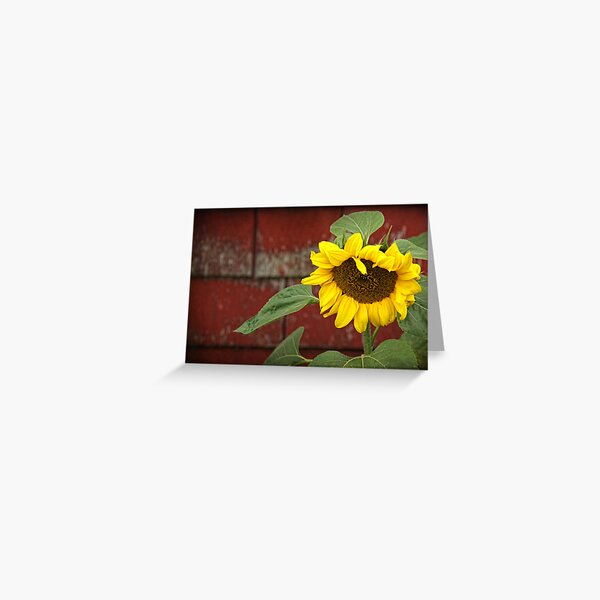 Sunflower & Shingles Greeting Card