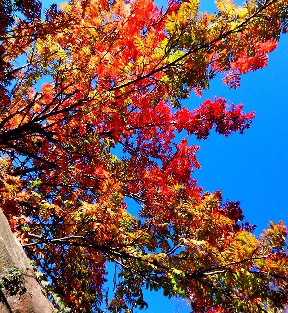 Autumn Colours by Nik Watt