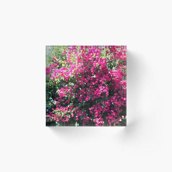 Pink Bougainvillea Acrylic Block