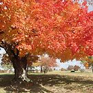 Autumn in the Ozarks 2 by phillipcmiller