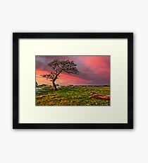 october-tree Framed Print