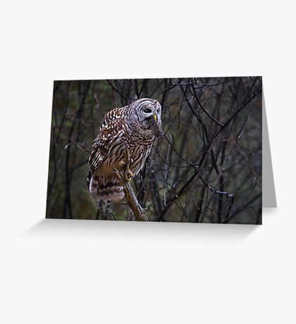 Barred Owl with vole Greeting Card