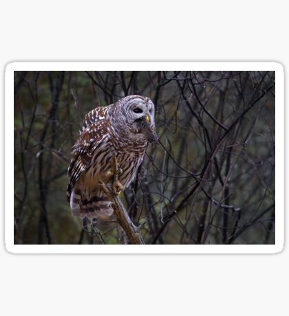 Barred Owl with vole Sticker