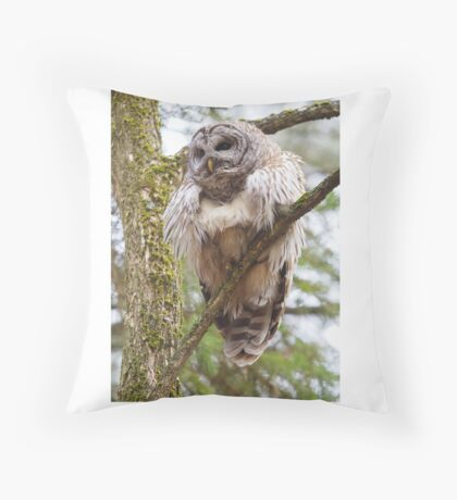 Cool Owl - Barred Owl Throw Pillow