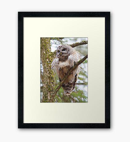 Cool Owl - Barred Owl Framed Print