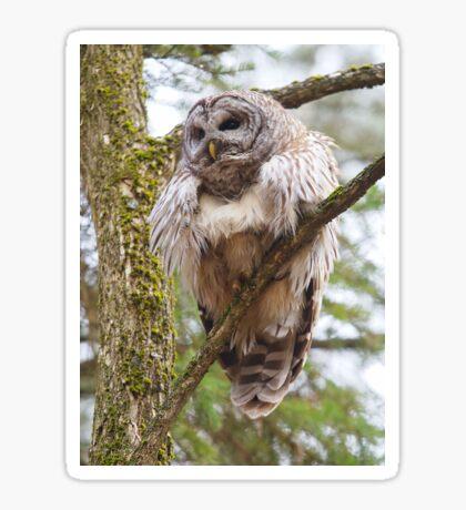 Cool Owl - Barred Owl Sticker