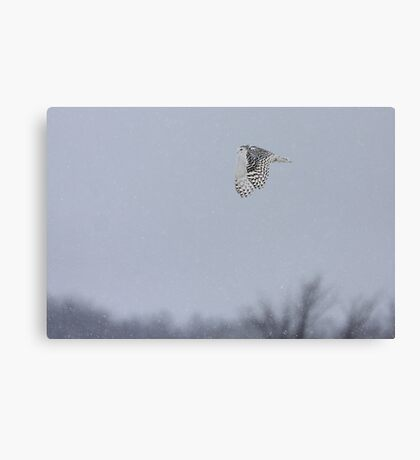 Snowy owl...high above the treetops Canvas Print
