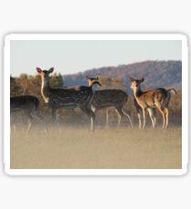 Axis Deer Sticker