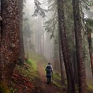 Fog Hiker by Randy Craig (nature & landscape photography)