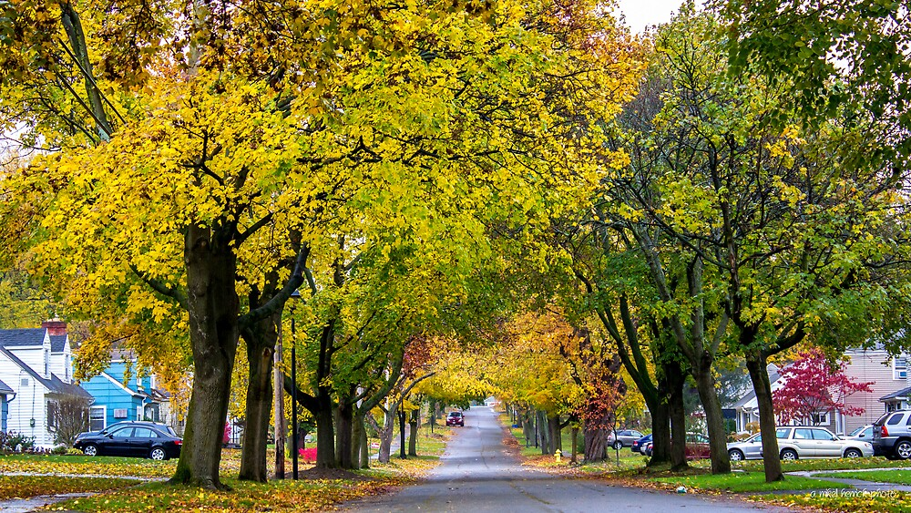 Fall in Fairport by Mikell Herrick