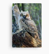 Horned Owl Metal Print