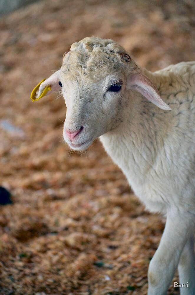 Soft as Lamb by Bami