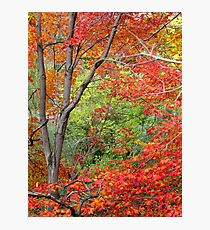 Autumn hues Photographic Print