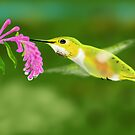 Hummingbird - Drawn on the iPad by Ray Cassel