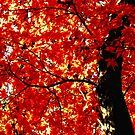 Under Autumn's Glow by Sharon Woerner