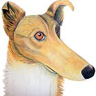 Rough collie quirky portrait by rayemond