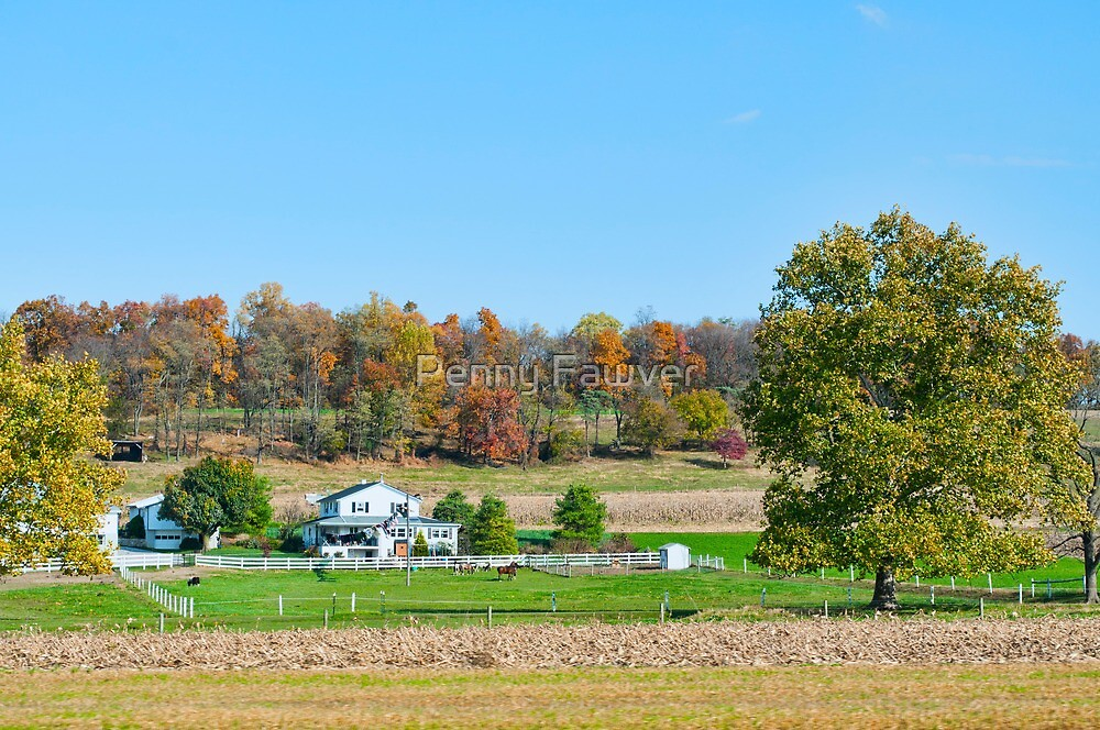 Horse farm  by Penny Rinker