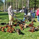 Bark in the Park by Bine