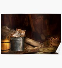 Animal - Cat - Bucket of fun  Poster