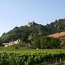 ineyard near Kuenringerburg castle in Durnstein, near the Danube, Wachau Austria by Ilan Cohen
