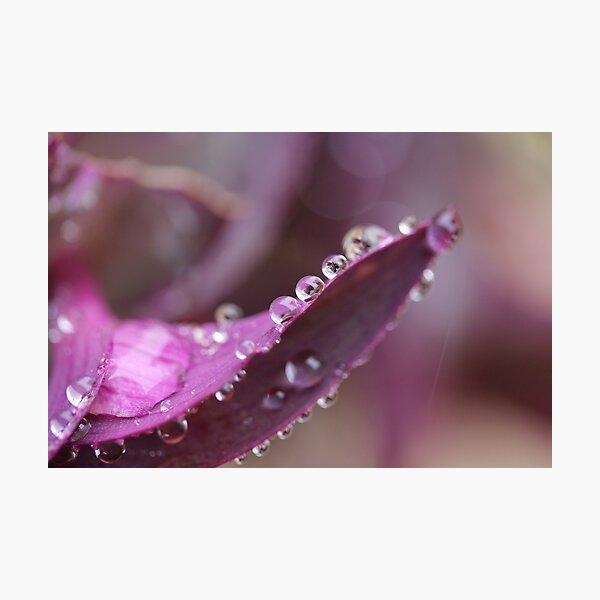Glisten Photographic Print