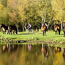 Ponies in the Park by mikebov