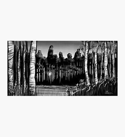 Birch and Beaver Photographic Print