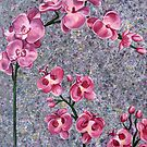 Orchids by Rachelle Dyer