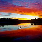 Double Crested Cormorant at Sunset by Paul Gitto