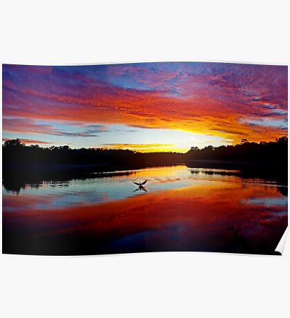Double Crested Cormorant at Sunset Poster