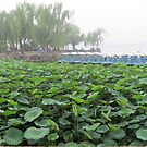 Lilly pads in China by TravelGrl