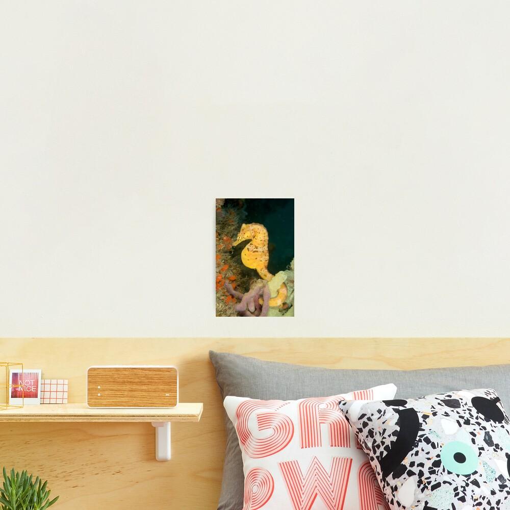 """""""Honey"""" Photographic Print"""