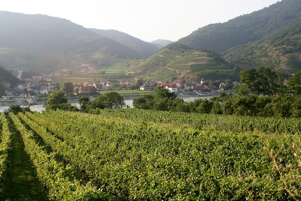 Vineyard and small village near the Danube, Wachau Austria by Ilan Cohen