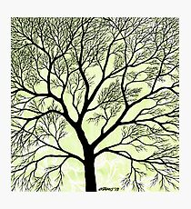 BIG OLD TREE Photographic Print
