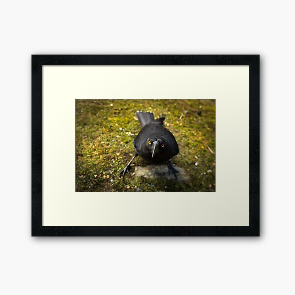 Give me that muffin! Framed Art Print