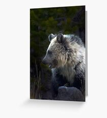 Grizzly Cub-Signed-#3644 Greeting Card