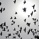 LA birds by Damien Margo