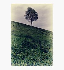 Isolated green fine art tree Photographic Print