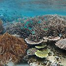 Reef @ Paradise Bay by Reef Ecoimages